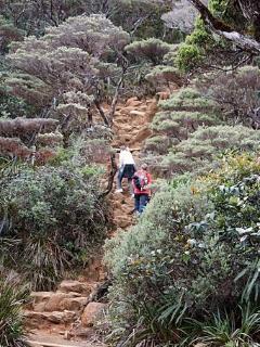 Long Climb Up Mount Kinabalu  - 4095 Meter
