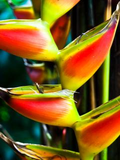 The Botanical Ark Retreat are renown for their tropical flowers, like this splendid heliconia.