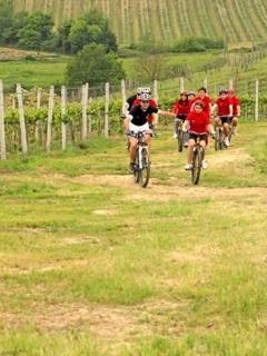 Bike-excursions around nearest vineyards and nearest woods