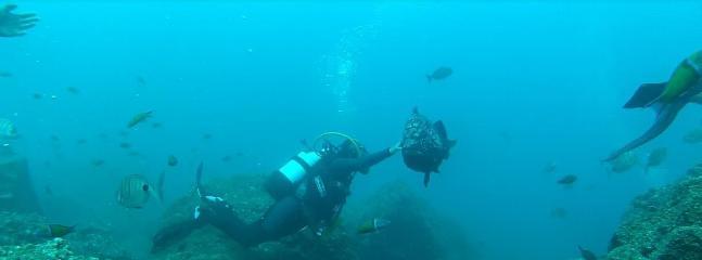 Diving at Garajau