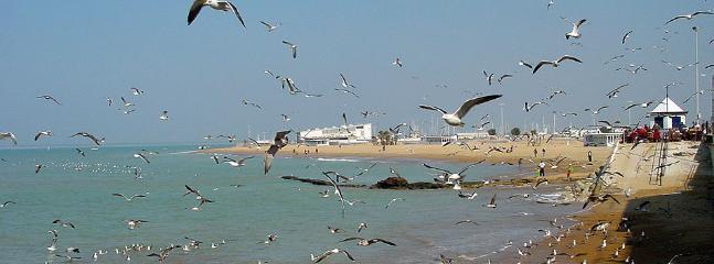 vuelo de gaviotas