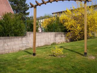 Arbuste sur pelouse