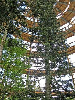 Famous tree top walk in Neuschoenau