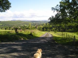 Field View, Cynghordy