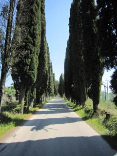 Cypress avenue leading up to Borgo di Libbiano