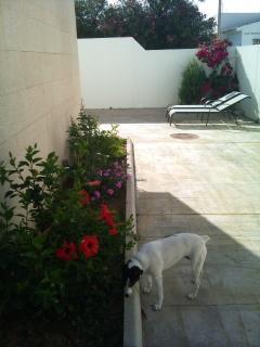 Patio-jardín y Rosita