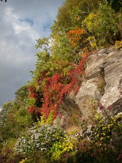 Autumn colours along the cliff