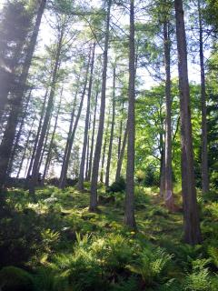 Argyll Forest surrounds you