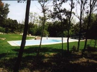 view from the pool and undergrowth