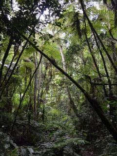 Magamba rainforest