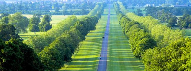 The Long Walk which leads to Windsor Castle.