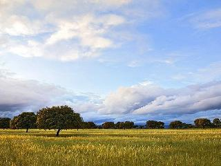 Dehesa de la Reserva de la Biosfera de Monfragüe