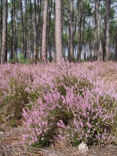 The pine forest near the house will delight walkers