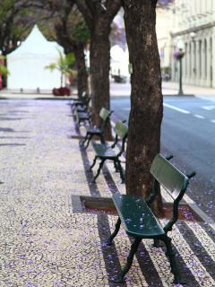 Benches in Avenida Arriaga.