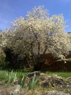 La Omañuela en Primavera