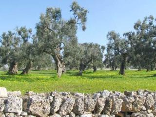 SPEND YOUR HOLIDAYS IN APULIA