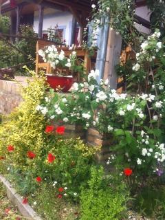 Flowers at the breakfast terrace