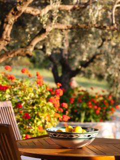 Relax among the olive trees.