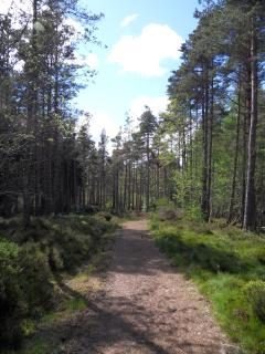 Woodland walk are possible at numerous locations within a short drive of Benmore.