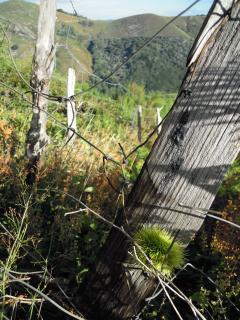 Un paysage typique de notre Ardèche.