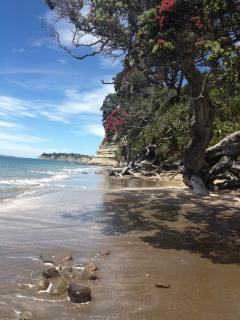 New Zealand's beautiful Christmas tree, the Pohutakawa, hanging over the shoreline