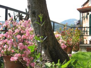 Porzione di giardino con azalee in fiore