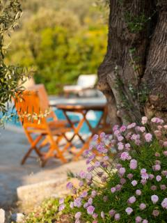 Relax in the olive grove.