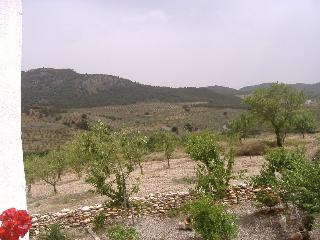 A few Almond Trees