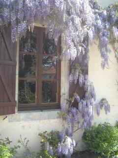 Wisteria over The Farmhouse