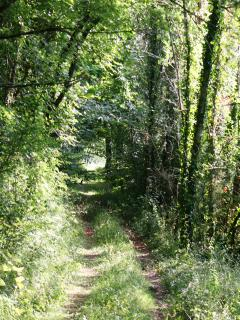 Footpath to the Butterfly Fields
