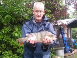 Perch over 3 lb