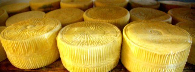 we make organic cheese