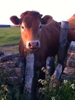 Daisy saying hello!