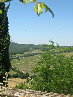 View of the hills and birds soaring over the vinyards