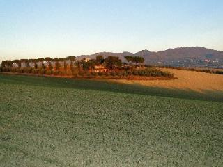 View of our farm at Casa Segreta, with olive trees and vineyards, and the best sunsets in the world!