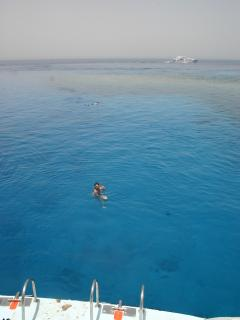 Some of the best snorkelling amd diving in the world!