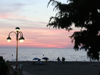 Pineta Marina di Castagneto