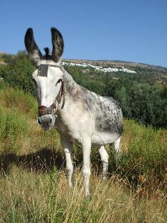 paco's donkey