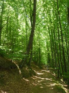 Walk in the forest around Labastide Rouairoux