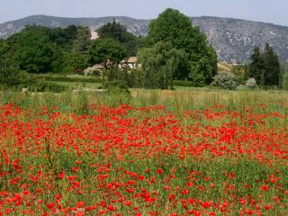 View from the poppy field