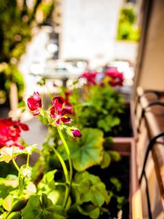 Flowers at the balcony