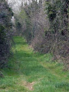 Laneway to lake
