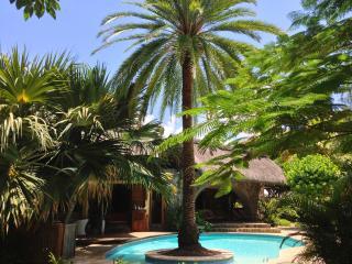 Swim under the Palm Tree near the Sea