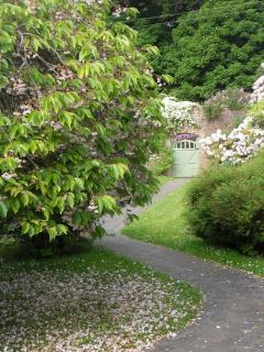 Enjoy the lovely cherry blossom in May at the seaside holiday cottage in pretty walled garden