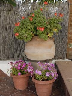pretty Spanish flowers