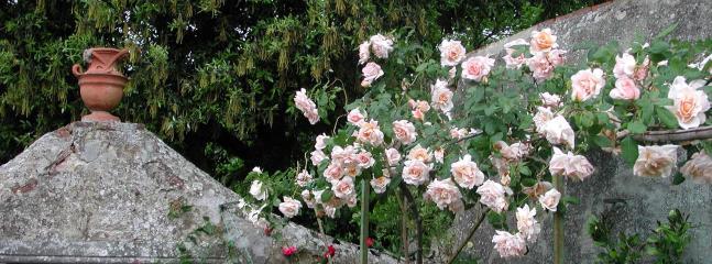 Rose in giardino
