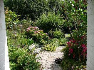 Looking from kitchen into garden