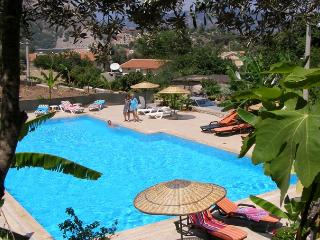 Olive Grove pool and garden