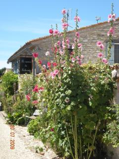Talmont where the narrow streets are lined with Hollyhocks