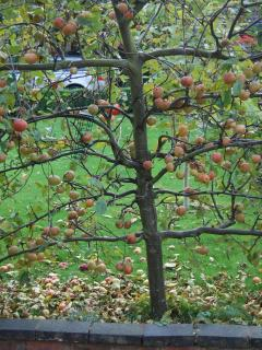 The property overlooks espalier apple trees which mark the changing seasons